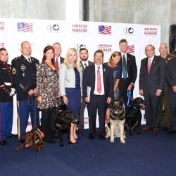 Anjing Militer Terima Penghargaan Tertinggi American Humane's Lois Pope K-9 Medal of Courage