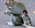 alas kedaton, monkeys, forest, monkey forest, bali, places, places of interest, bali places of interest