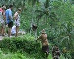 farmer, tegalalang, rice, terrace, ubud, bali, places, interest, tegalalang rice terrace, places of interest, bali places of interest