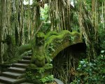 ubud, monkey forest, interest, place of interest, bali, gianyar, rain forest