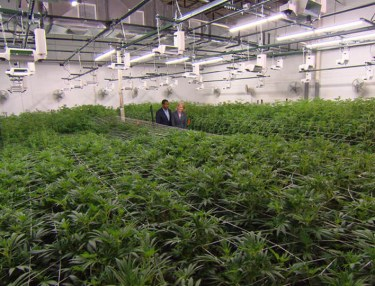 '60 Minutes' Explores Legalized Marijuana Biz In Colorado