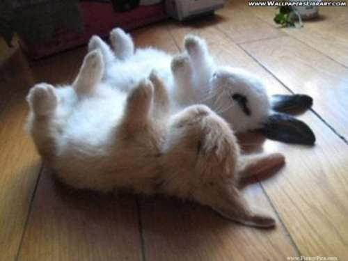 Funny-Cute-Rabbits-Funny-Cute-Rabbit-Picture-105-FunnyPica.com_