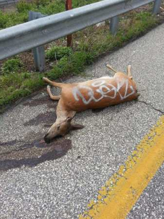 a dead deer with graffiti on 28th Street