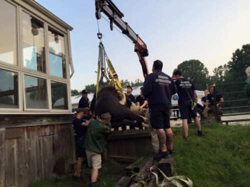 The rescue (photo courtesy Howard County FD)