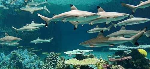 Aquarium sharks
