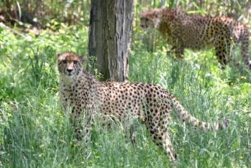 Refu and Wgasa. Photo courtesy of The Maryland Zoo