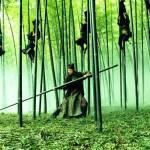 Bambusy w filmie – Dom latających sztyletów