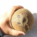 Nasiona palm – jak wyglądają?