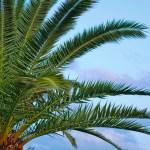 Palmy jako rośliny pokojowe – gatunki do różnych stanowisk