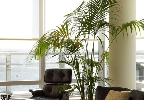 Palma doniczkowa w domu – kilka pomysłów