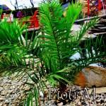 Sekrety nawożenia palm – radzi Piotr Mac