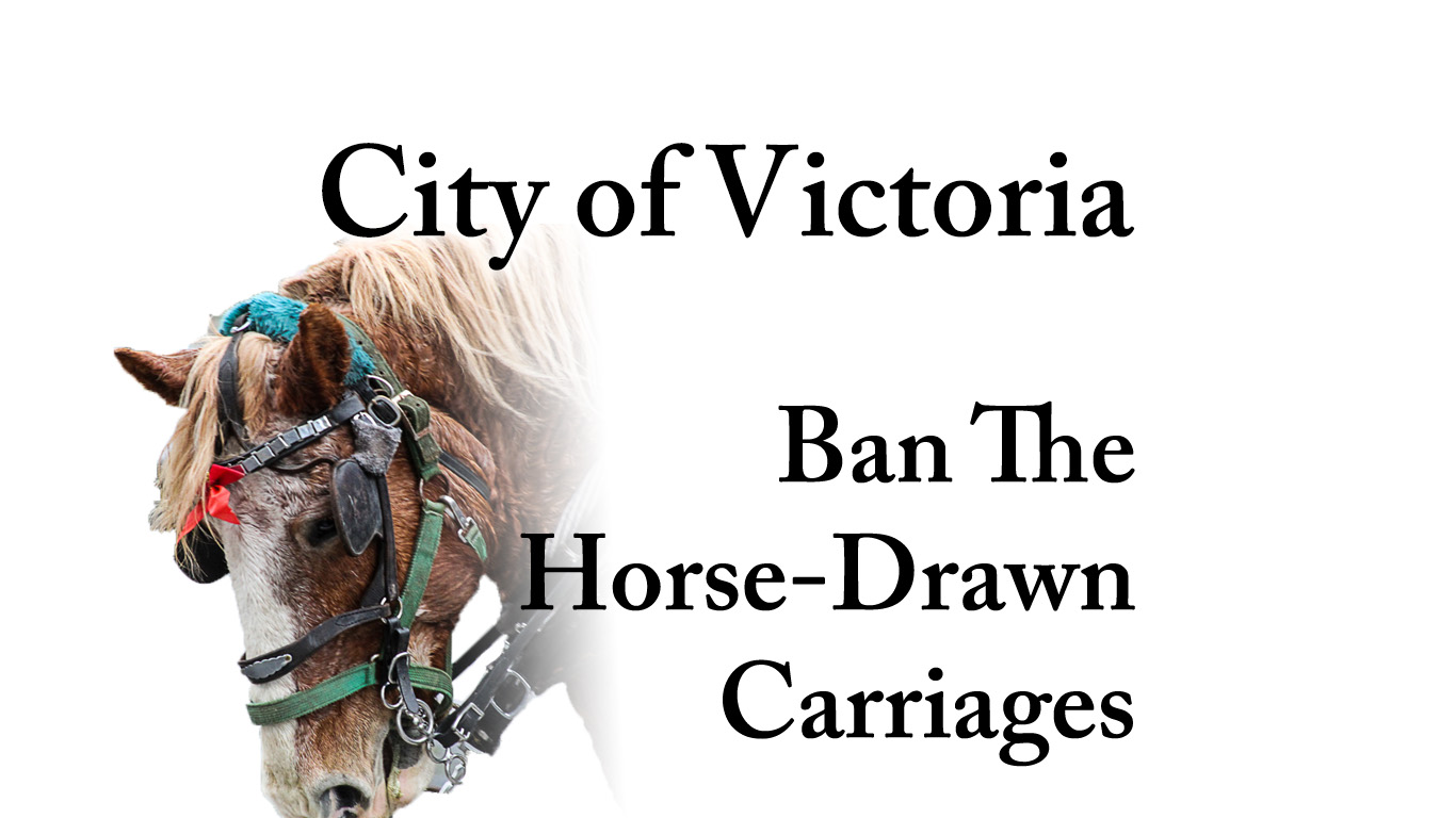 Petition to ban the horse drawn carriages