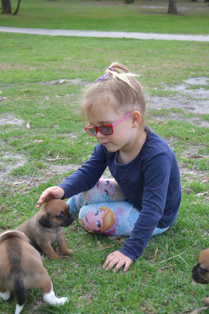 Banksia Park Puppies care