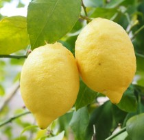 citro