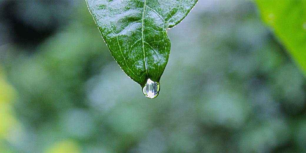 drop on a leaf by Shyamanta Baruah