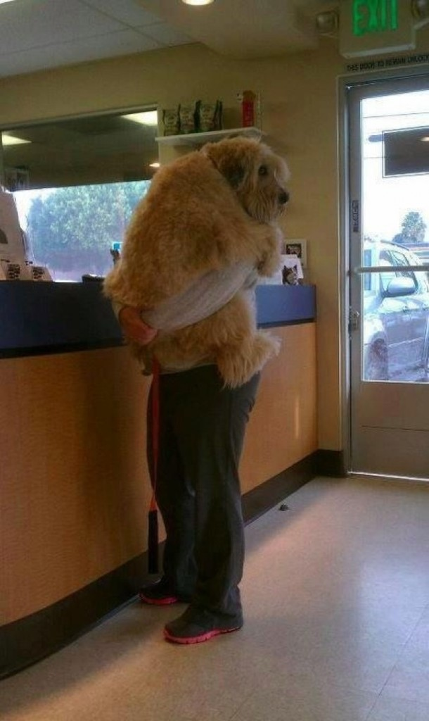 04-pets-going-to-vets-610x1024