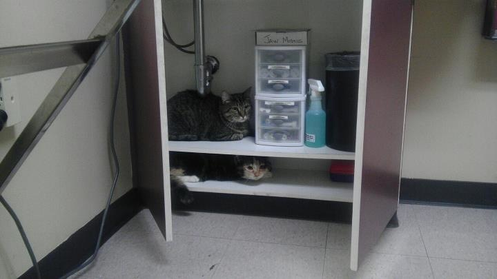 12-pets-going-to-vets