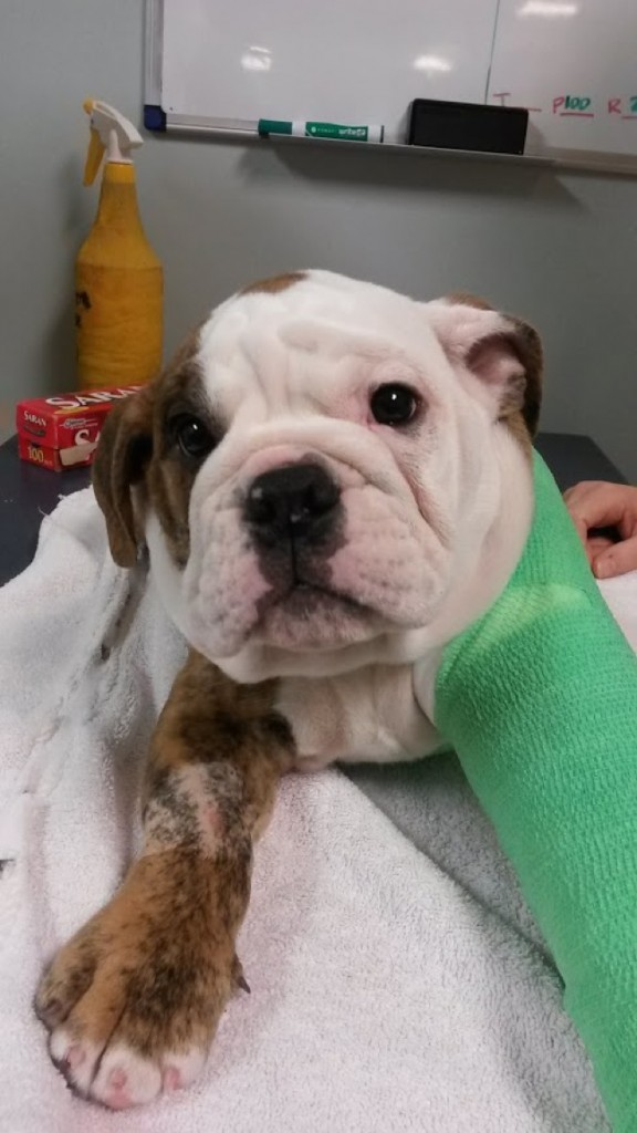 20-pets-going-to-vets-576x1024