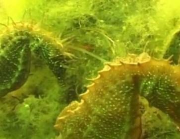 hippocampe 2