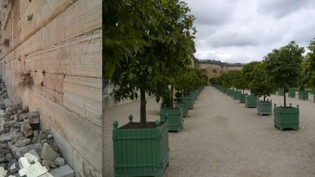 תפוזים בגני ארמונות ורסאי וצלף קוצני בכותל המערבי. שליטה וחדלונה