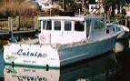 catnip charter small