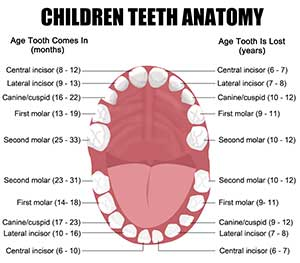 Baby Tooth Extraction