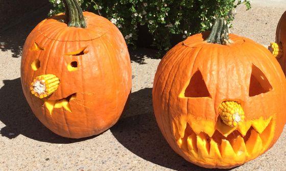 pumpkin-harvest