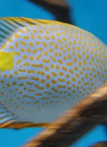 tropical-multicolor-fish