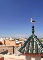 toit-marrakech