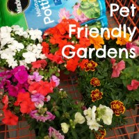 P is for Pet Friendly Gardens #atozchallenge