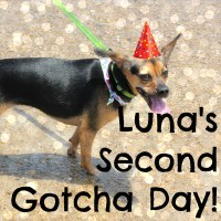Luna's Second Gotcha Day!
