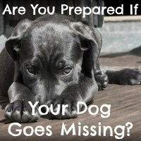 Are You Prepared if Your Pet Goes Missing?