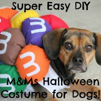 DIY Mini M&Ms Halloween Costume for Dogs