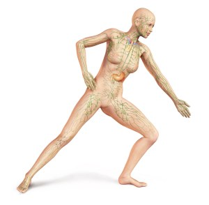 Female naked body, with full Lymphatic system superimposed. Anatomy image.