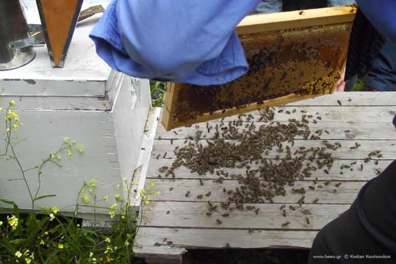 Ενίσχυση μελισσιού με οικιακές εργάτριες.