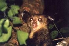top 10 cutest and rarest primates