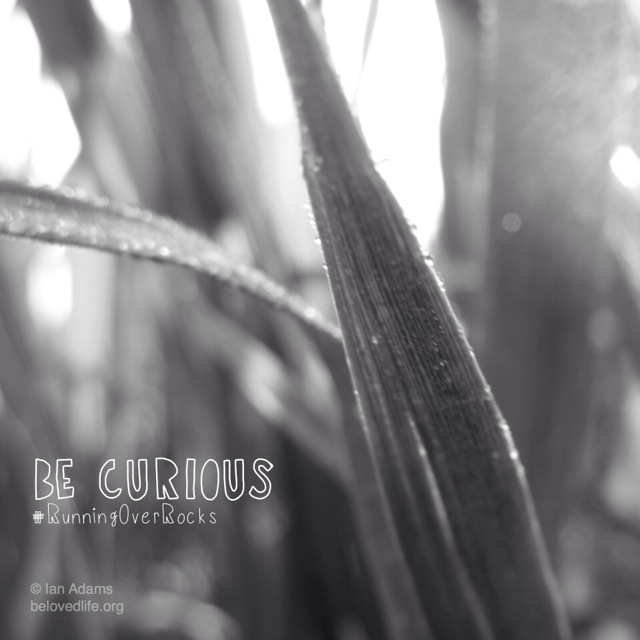 beloved life: be curious