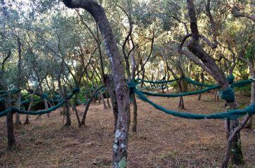 olive harvesting nets