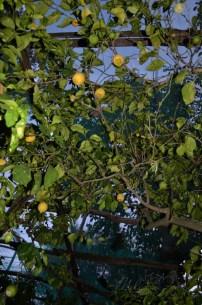 The guest house lemon grove