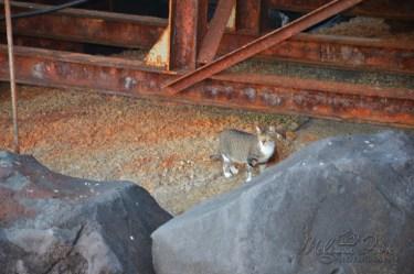 Sorrento kitty