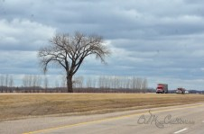 Manitoba. not a lot to see..... the occasional tree...