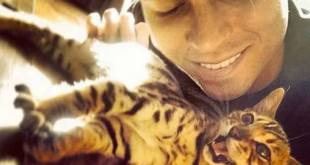 Joey Essex Bengal Cat