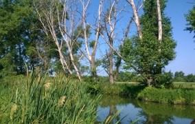 Тече вода з-під явора: у Бердичеві виявили, де бере свій початок екологічна катастрофа. ВІДЕО