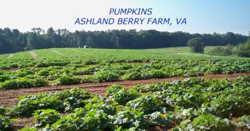 Medium Of Ashland Berry Farm