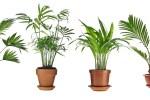 Five houseplants you won't kill 8