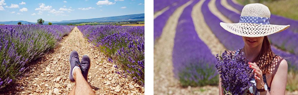 Ou trouver la lavande en provence for Ou acheter le tapis champ de fleurs