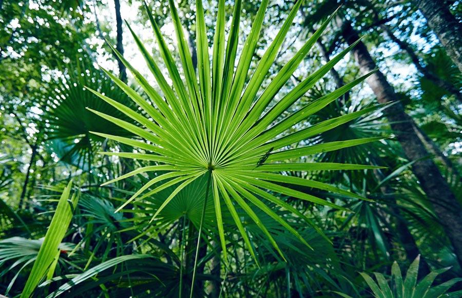 Jungle, Sian Kaan Mexique