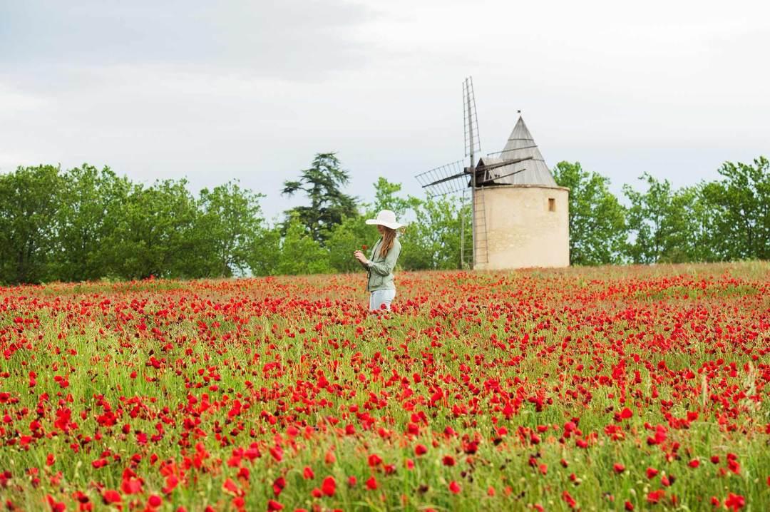 Moulin de Sannes Coquelicots