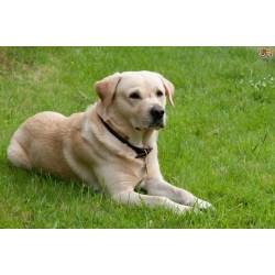 Small Crop Of Friendliest Dog Breeds