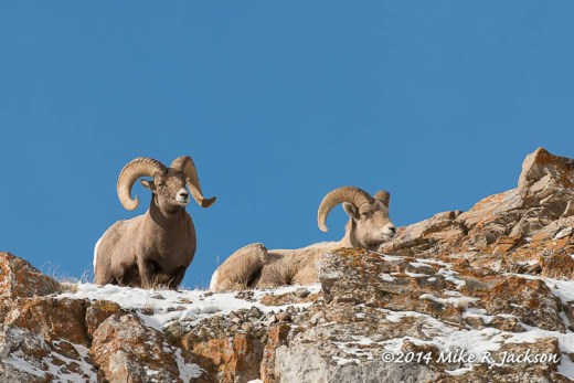 Web_ Rams Watching Jan4